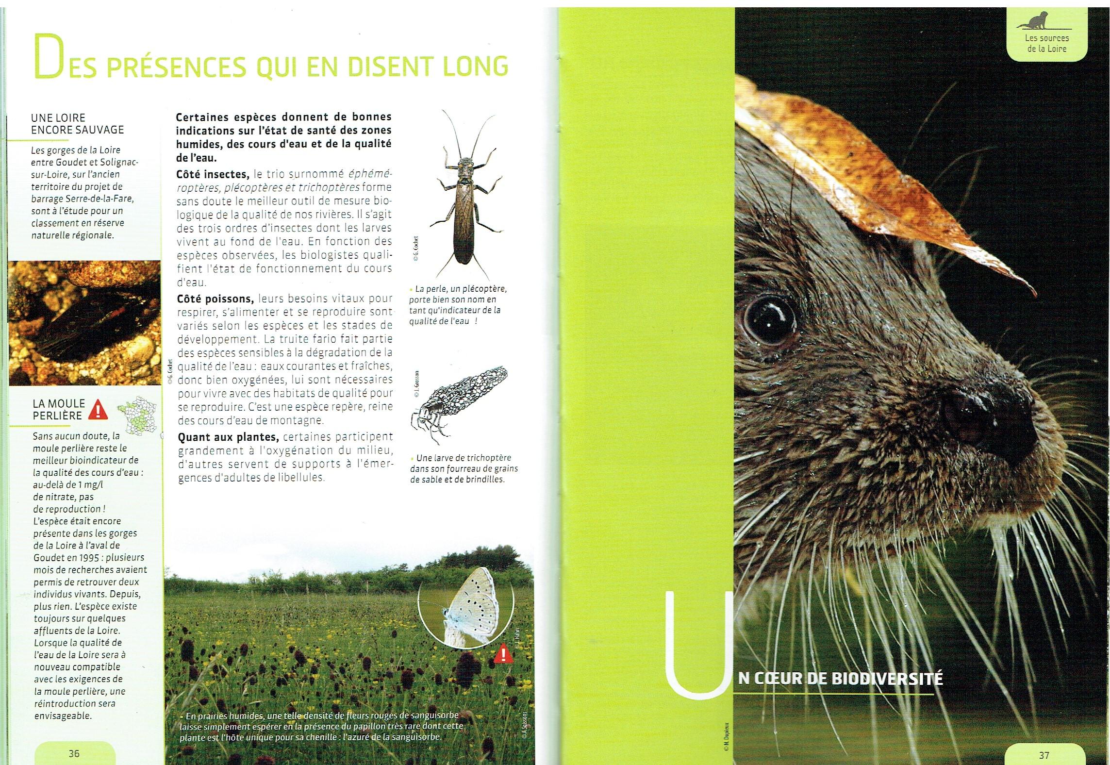 La loutre, symbole des rivières du bassin des sources de la Loire