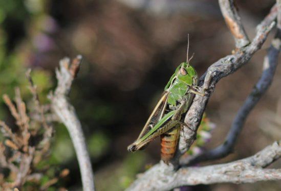 Le monde mystérieux des insectes