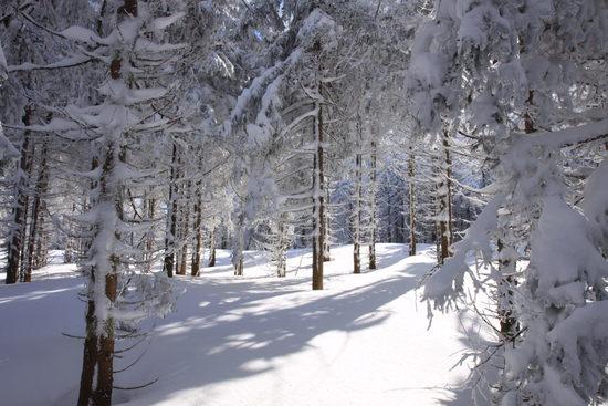 Aventure nordique & bivouac au cœur des monts d'Ardèche