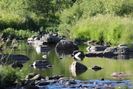 La vie courante des bords de rivières