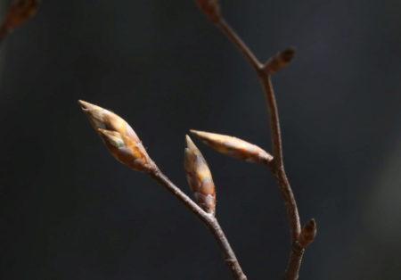 Le printemps arrive à petits pas dans les monts d'Ardèche