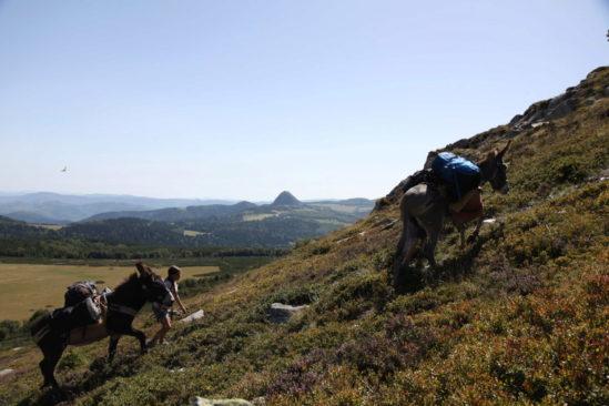 Le tour des volcans des monts d'Ardèche avec un âne