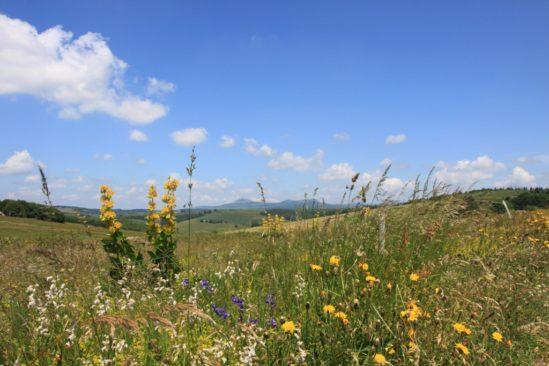 Déguster l'Ardèche et ses plantes sauvages de montagne