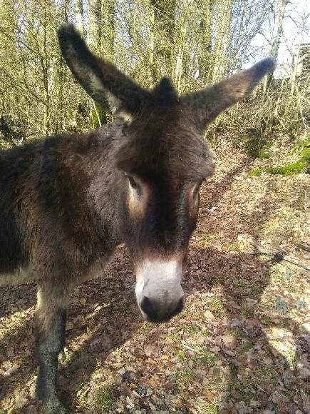 Arrivée de l'âne Cachou