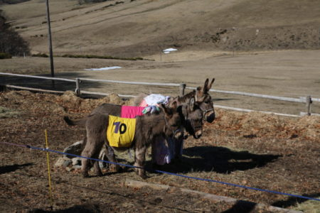 La fête de l'âne à Pré Lafont dans les monts d'Ardèche