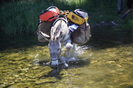 Réouverture de la location d'ânes dans les monts d'Ardèche