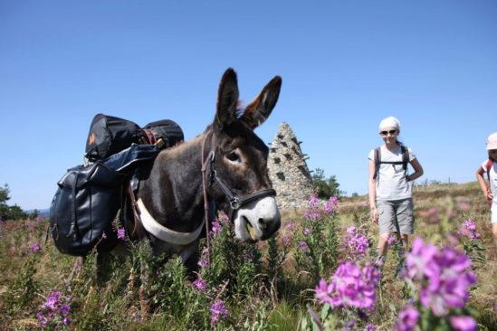 Rando avec un âne au pays des sources de la Loire