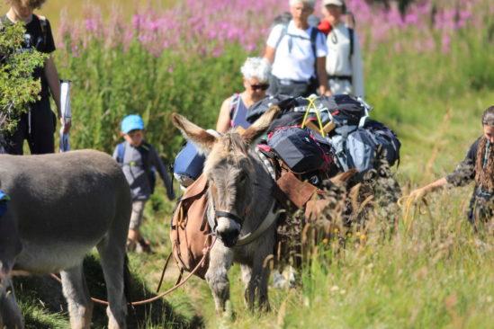Les sources de la Loire avec un âne dans les Monts d'Ardèche guidé